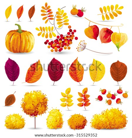 Autumn leaves, trees, bushes, berries and flowers set for seasonal events and sales - stock vector