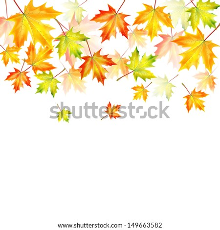 autumn maple leaves on a white background.autumn background.vector