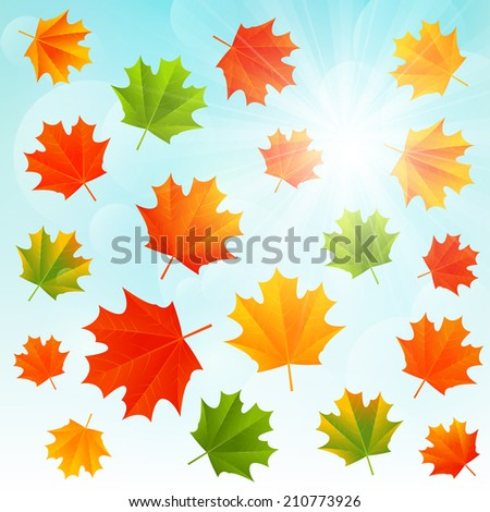 Autumn maple leaves on sunny background