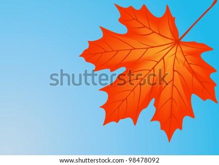 Autumn red maple leaf, file EPS.8 illustration. - stock vector