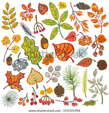 Autumn set.Colored eaves ,berries,pine branches,spruce cones and acorns.Fall wood harvest.Isolated vector.Natural Bright colors.For card,patterns,invitation,print, web illustration,thanksgiving decor. - stock vector