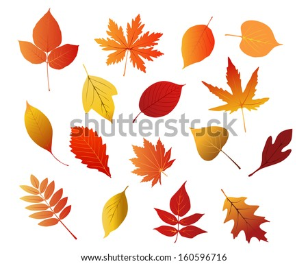 Autumnal red, yellow and brown leaves isolated on white background for seasonal design or idea of logo. Jpeg version also available in gallery - stock vector