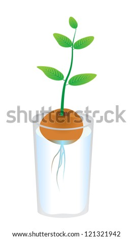 Avocado plant isolated on white background. Vector