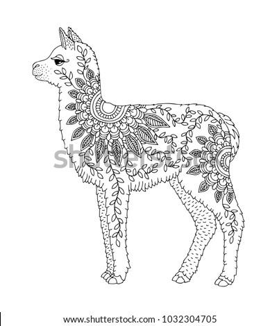 Baby Alpaca Hand Drawn Llama Adult Stock Vector HD Royalty Free