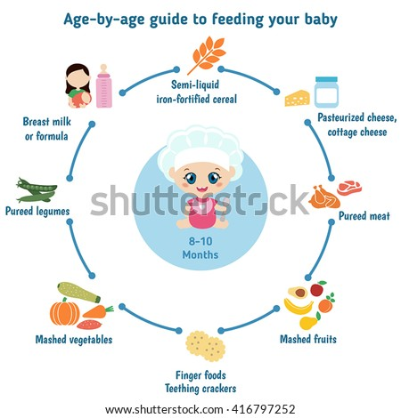 baby child infographic presentation template baby stock vector rh shutterstock com age by age guide to feeding your baby and toddler Baby Gerber Feeding Guide