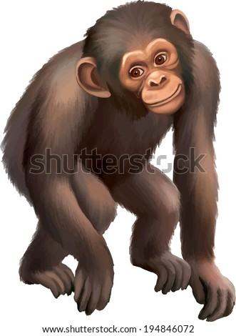 Baby Monkey Gorilla isolated on white background - stock vector