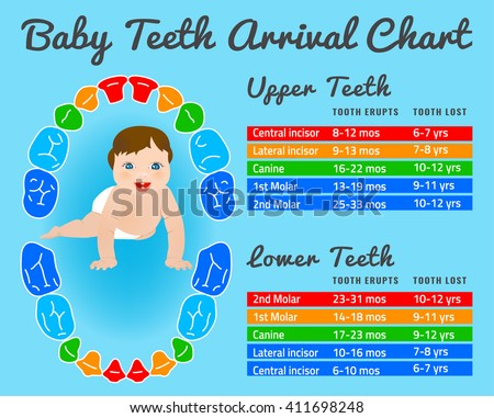 Baby prelimanary tooth eruption chart vector stock vector hd baby prelimanary tooth eruption chart vector illustration editable image in bright colors on a ccuart Image collections