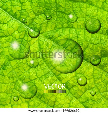 Background green leaf with drops. Vector - stock vector