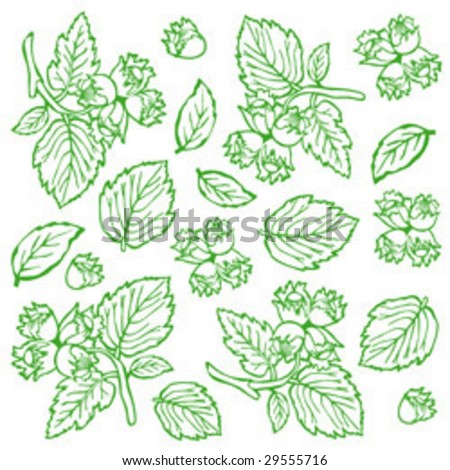 Background nuts (hazelnuts, green) close up - stock vector