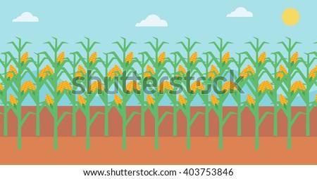 Background of corn field. - stock vector