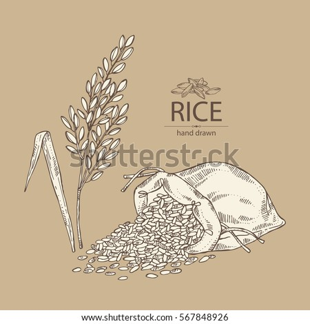 Background with rice, bag of rice. hand drawn.