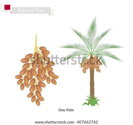 Bahrain Tree, Illustration of Date Palm. The National Tree of Bahrain. - stock vector