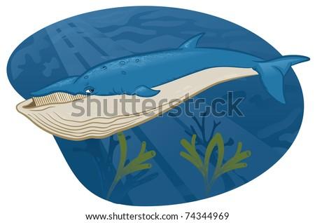 Baleen whale - stock vector