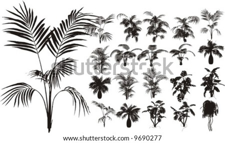 Bamboo and ?ther tropical plant - stock vector