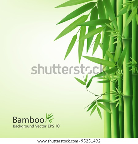 Bamboo green leaf, vector illustration - stock vector