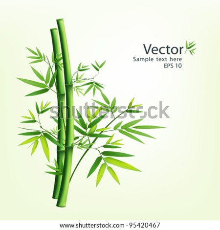 Bamboo green vector illustration