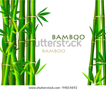 Bamboo isolated  on white background - stock vector