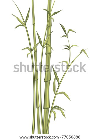 Bamboo plant isolated on white