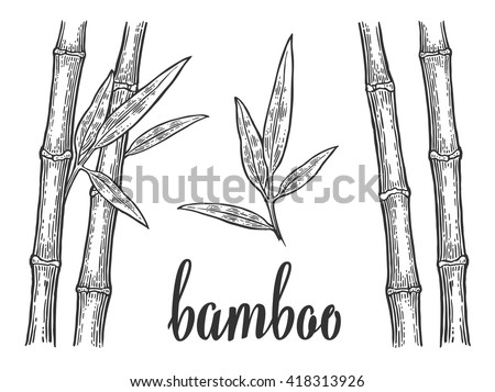 Bamboo trees with leaf white silhouettes and black outline. Hand drawn design element. Vintage vector engraving illustration for logotype, poster, web. Isolated on background.