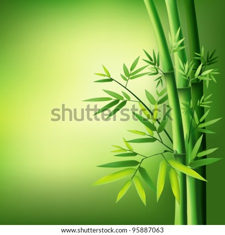 Bamboo vector illustration - stock vector