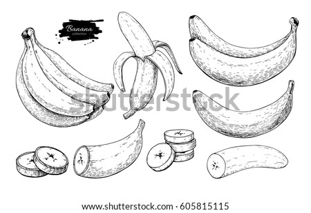 Banana Set Vector Drawing Isolated Hand Drawn Bunch Peel And Sliced Pieces