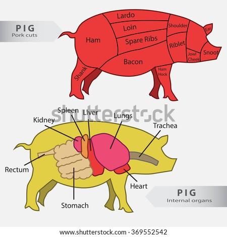 Basic Pig Internal Organs Cuts Chart Stock Vector 2018 369552542
