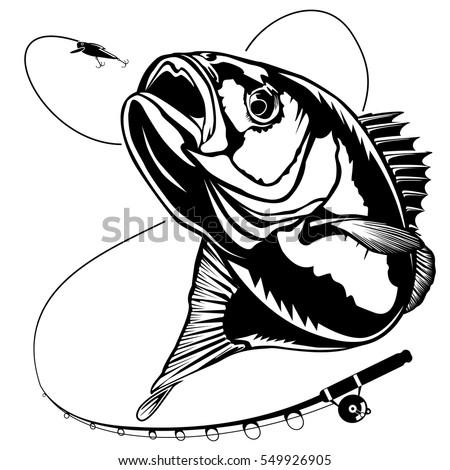 Bass Fish Perch Fishing Vector Illustration