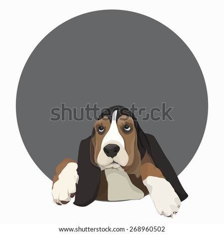 Basset hound in the gray circle
