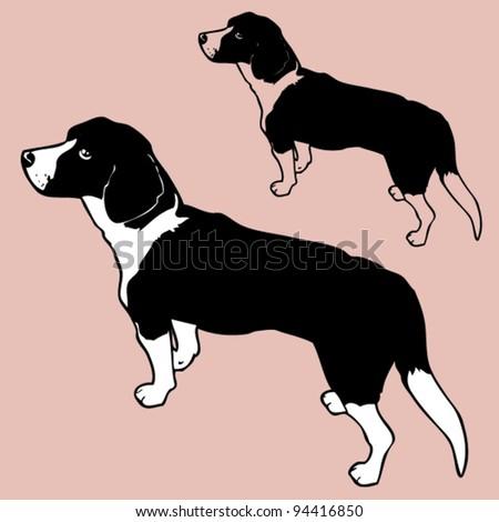 Beagle - stock vector
