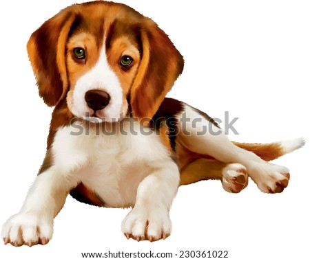 beagle puppy laying over white background - stock vector