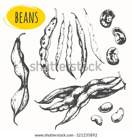 Beans and legumes. Set of hand drawn food. Fresh organic food. Vector illustration with sketch pods of asparagus. Black and white.