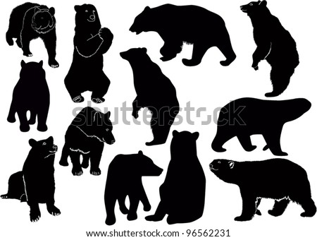 Bear  animals nature