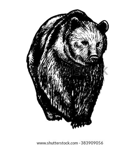 bear sketch - vector - stock vector