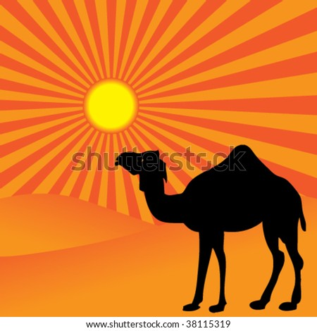beautiful alone camel on red sunset - stock vector