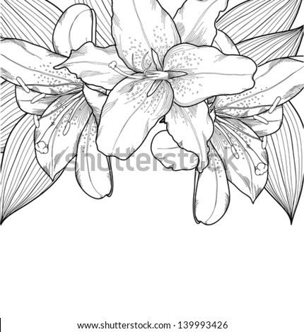 beautiful black-and-white background with lilies, hand-drawn. Many similarities in the profile of the artist - stock vector