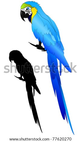 beautiful Blue-and-yellow Macaw parrot vector - stock vector