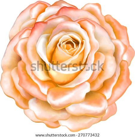 Beautiful bright orange red sexy Rose Flower isolated on white background. Vector illustration - stock vector
