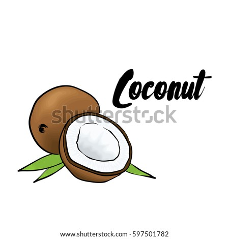 Beautiful coconut. Vector illustration. Tropical fruits.