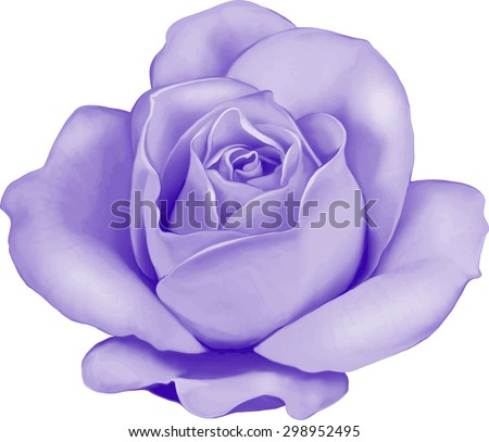 Beautiful Colorful Light Purple Rose Flower Isolated On White Background Vector Illustration
