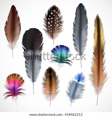 Beautiful colorful small and big bird realistic feathers set isolated on white background vector illustration