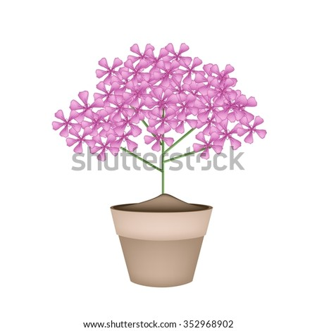 Beautiful Flower, Illustration Bunch of Beautiful Pink Geranium Flowers or Pelargonium Graveolens Flowers in A Pot Isolated on White Background.