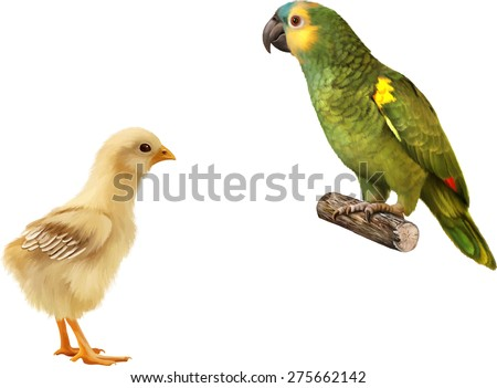 Beautiful green Parrot, Cute young little chicken and a chick isolated on white background - stock vector