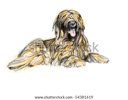 Beautiful hairy dog. - stock vector