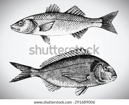 beautiful hand drawn illustration with different fishes, gilt head and sea bass. - stock vector