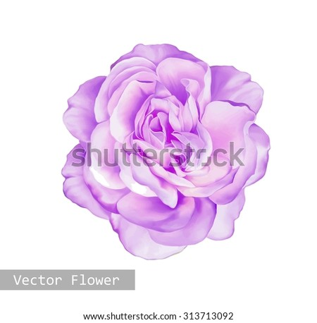 Beautiful light pink red Rose Flower isolated on white background. Vector illustration - stock vector