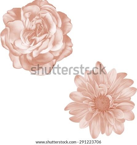 Beautiful light red Rose Flower isolated on white background. Vector illustration. single red gerbera - stock vector