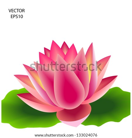 Beautiful pink lotus flower,water lily background,natural  background,vector - stock vector