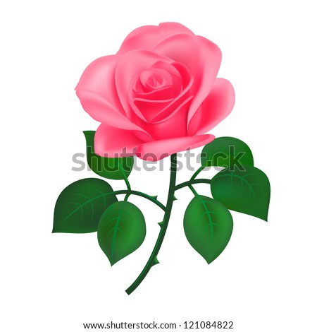 Beautiful pink rose, isolated on white - stock vector