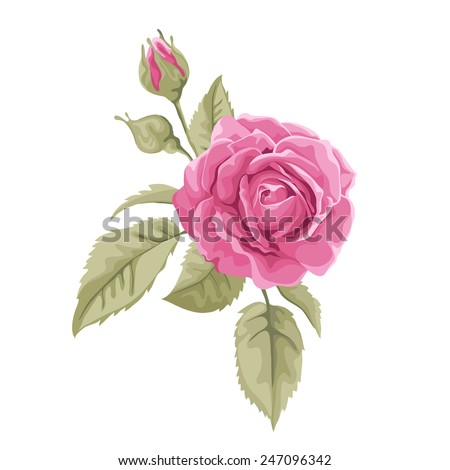 Beautiful pink  rose isolated on white. Perfect for background greeting cards and invitations of the wedding, birthday, Valentine's Day, Mother's Day. - stock vector