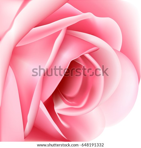 Beautiful pink rose on a white background. Vector illustration.